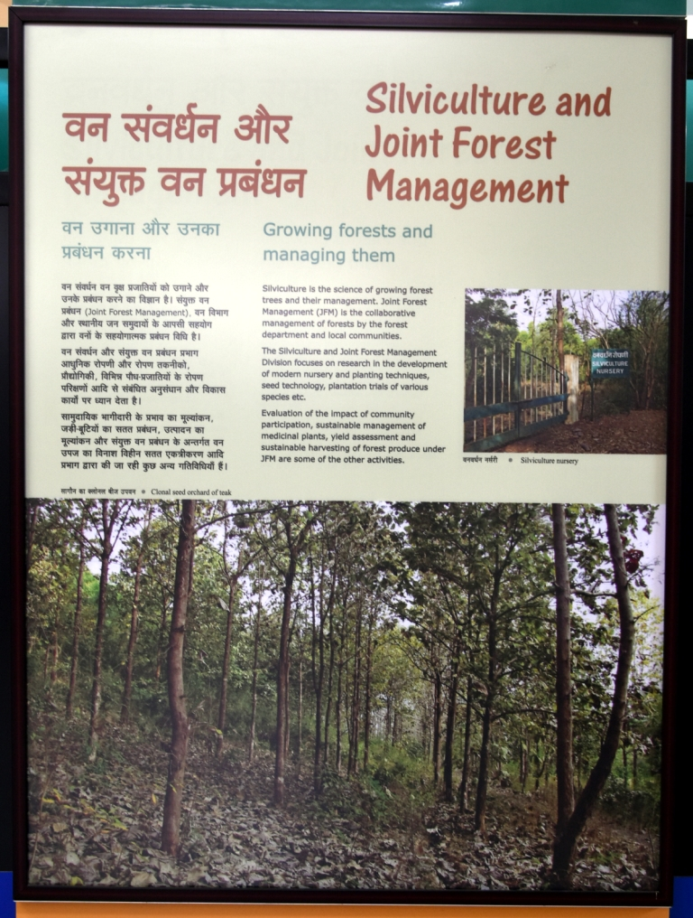 Silviculture and Joint Forest Management