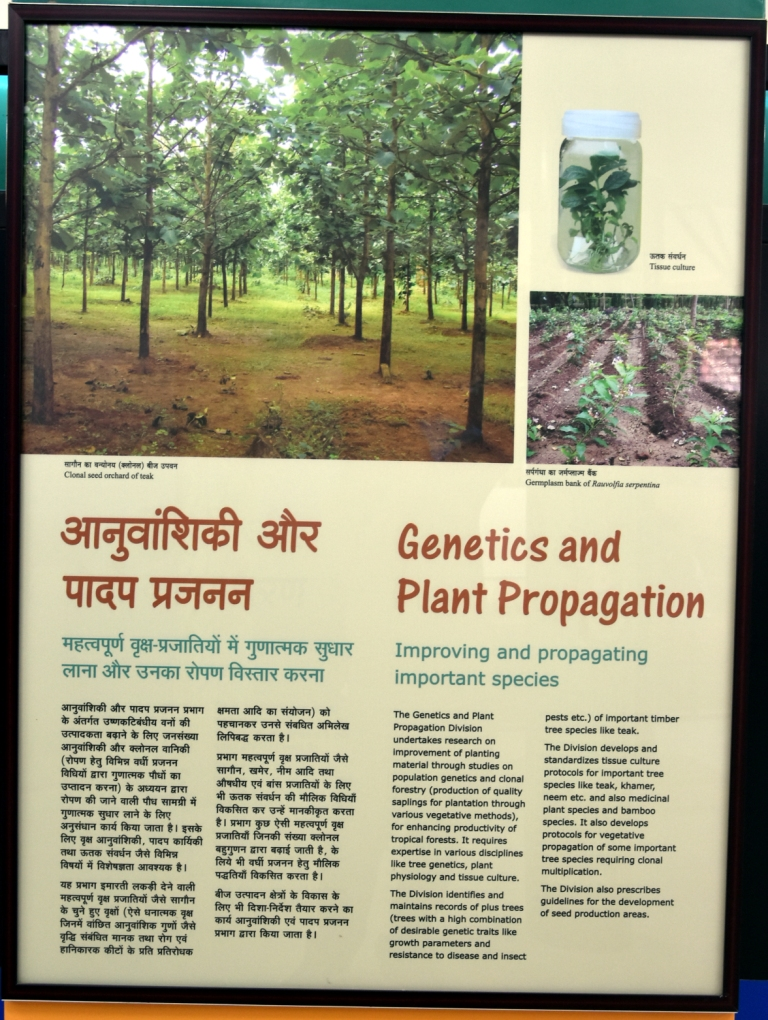 Genetics and Plant Propagation