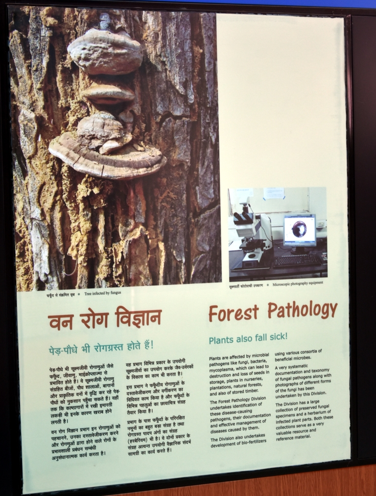 Forest Pathology